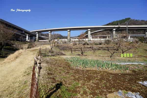 bee-高尾山8411