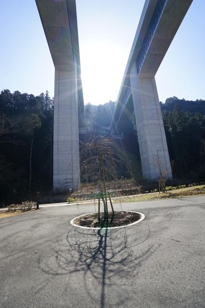 bee-高尾山8400