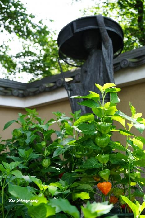 bee-信松院-ホオズキ9384