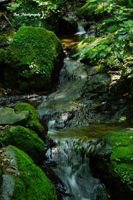 bee-小仏川ー蛇滝入口0847