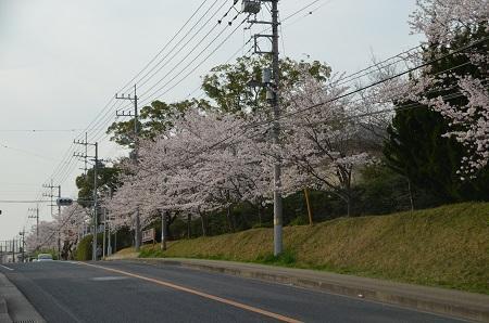 20160406桜13