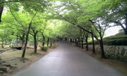 maruyama7gatu4.jpg