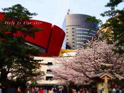 160402桜リバ
