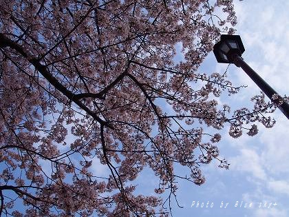 160402桜街灯