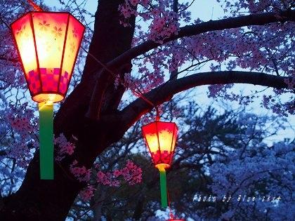160402夜桜