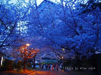 160402夜桜トンネル