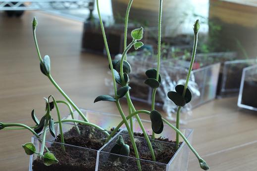 枝豆(4)