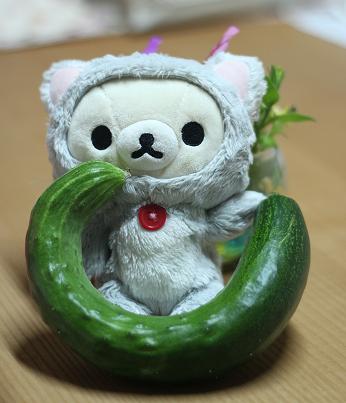 キュウリ(3)