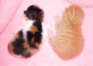 4月11日引取幼猫