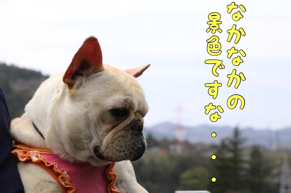 富山紀行 4