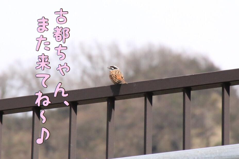 富山紀行 6