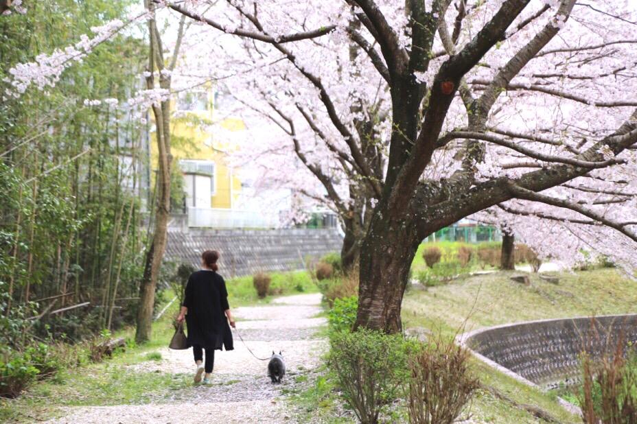 花見 水無瀬 8