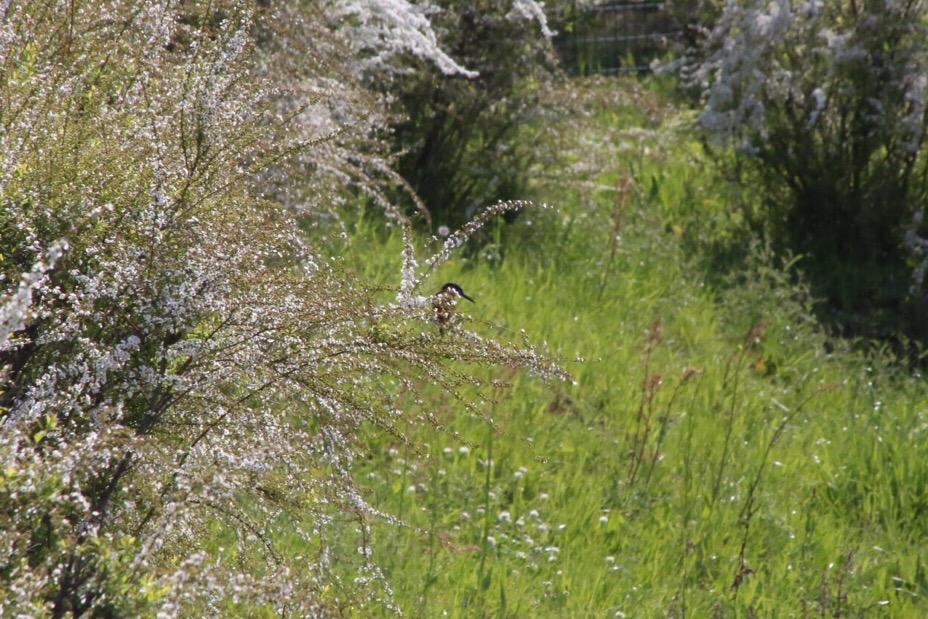於大公園の野鳥 1