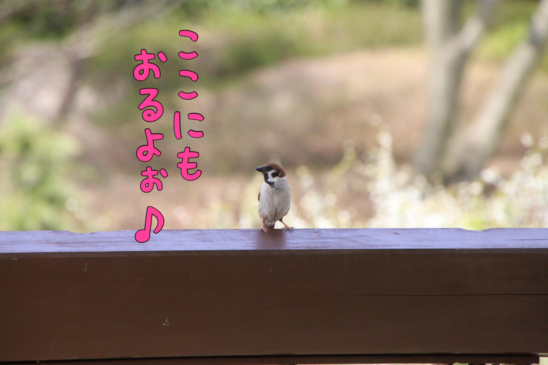 於大公園の野鳥 5