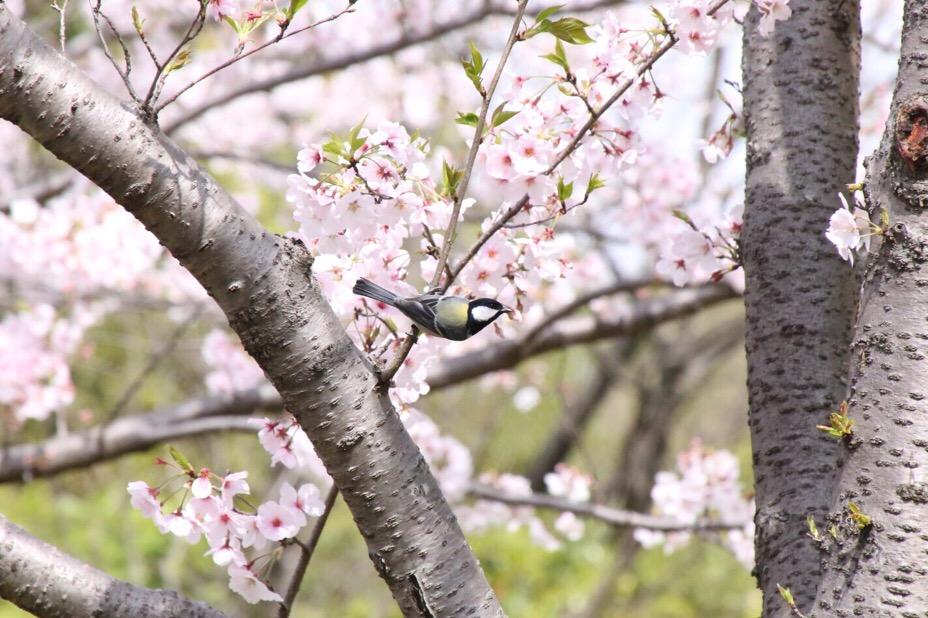 於大公園の野鳥 6