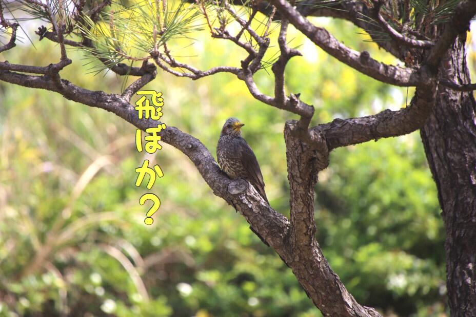 於大公園の野鳥 8