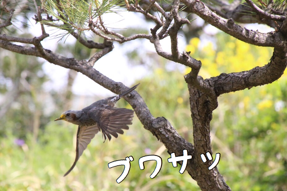 於大公園の野鳥 9
