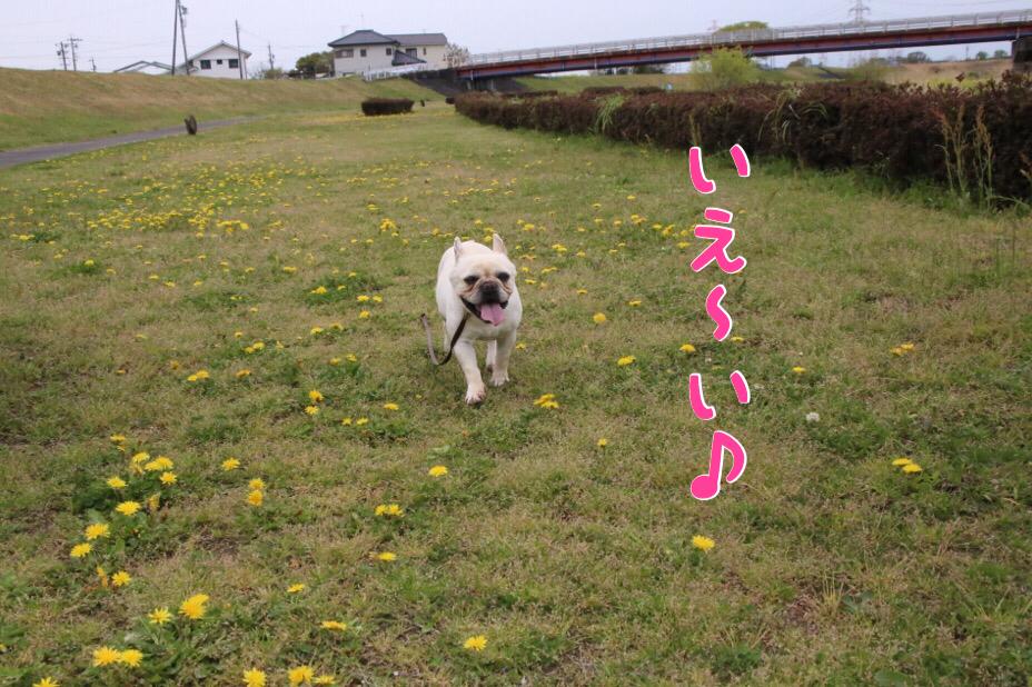 ピッピの散歩道 4