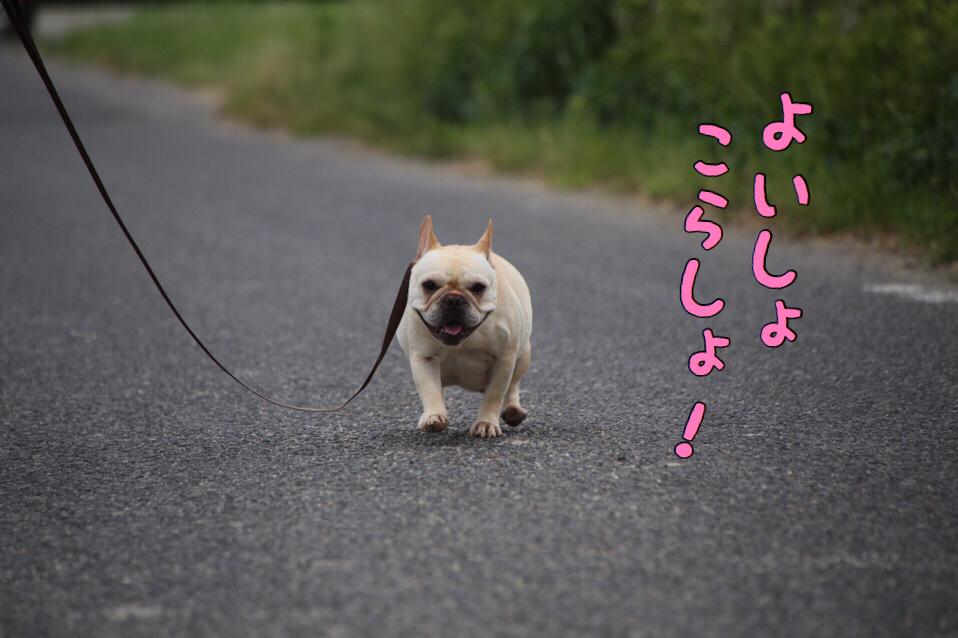 ホクママの散歩 1