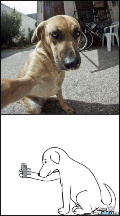 自撮りする犬
