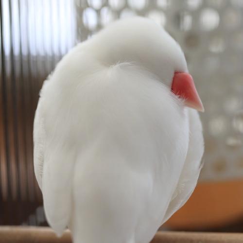 fuwa fuwa (4)