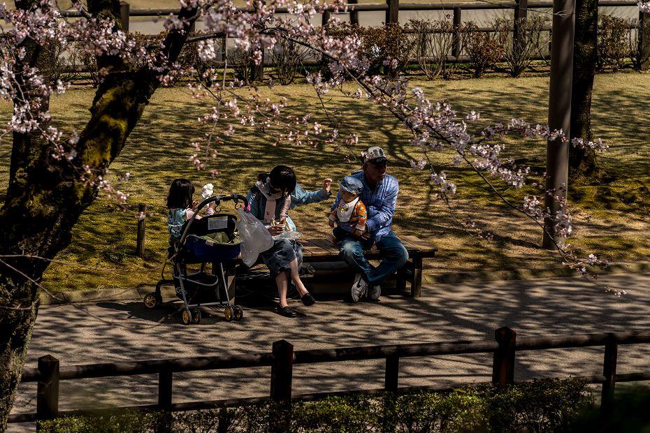 2016.04.02金沢城の桜15