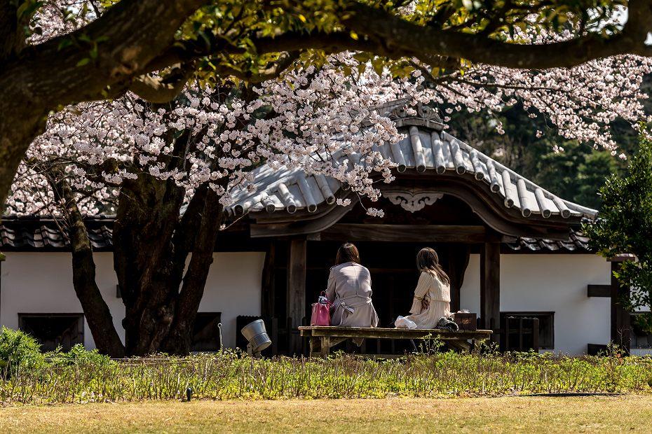 2016.04.02金沢城の桜14