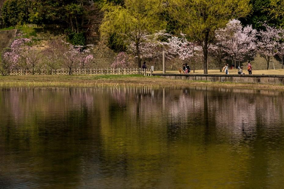 2016.04.02金沢城の桜11