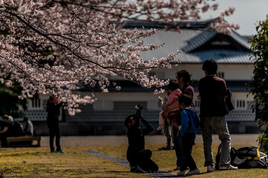 2016.04.02金沢城の桜10