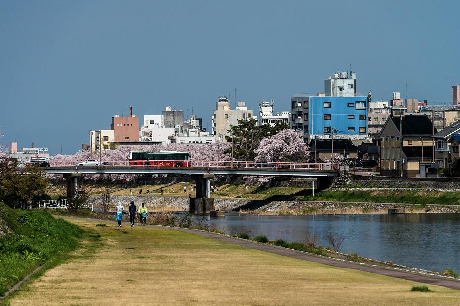 2016.04.06犀川の桜並木4