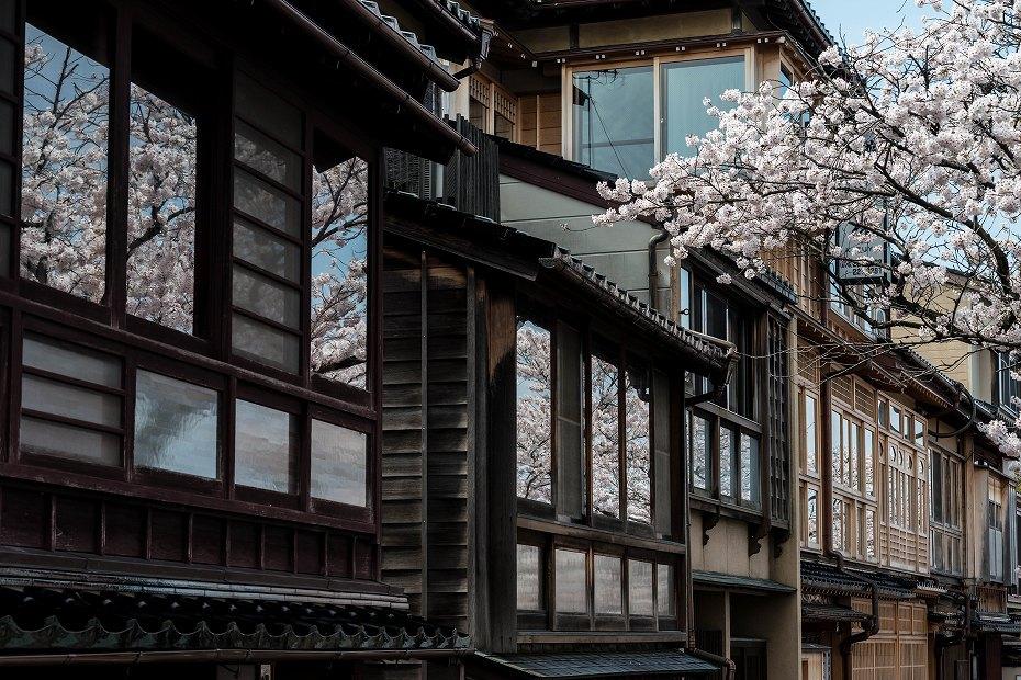 2016.04.06主計町の桜8