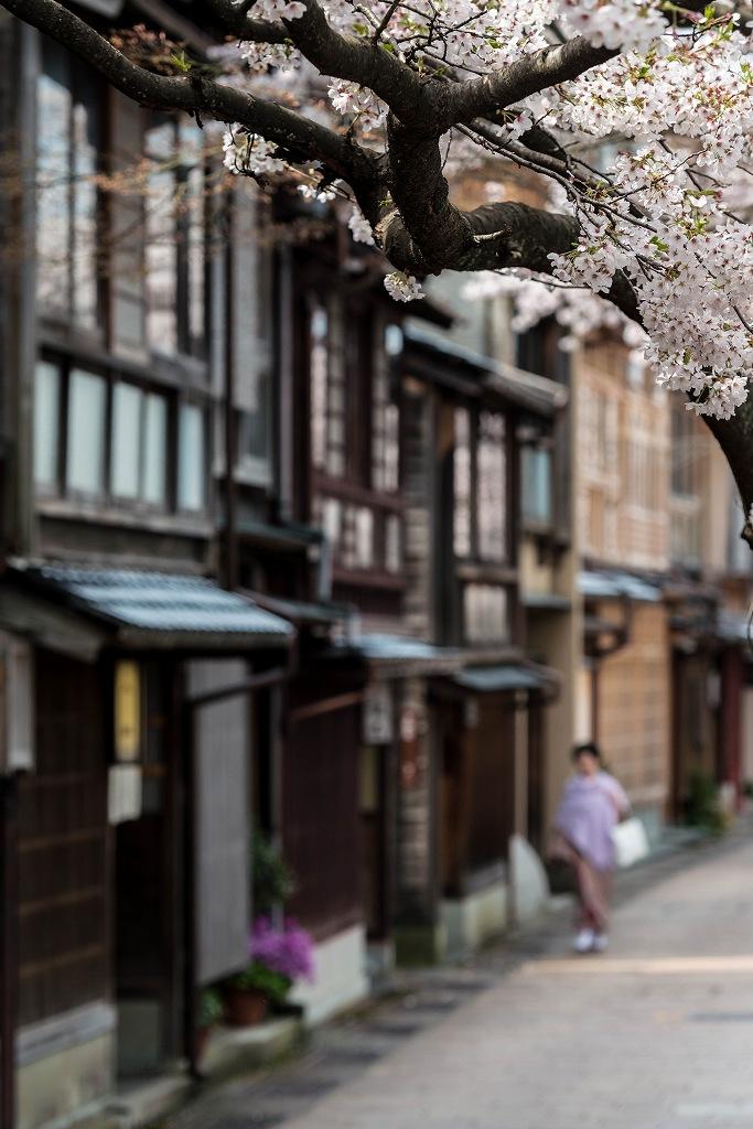 2016.04.06主計町の桜6
