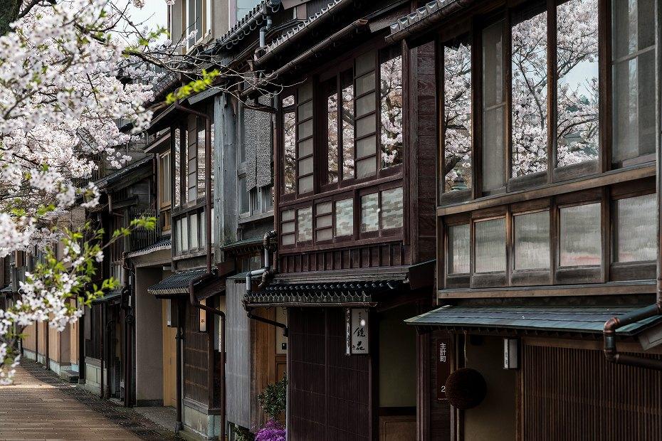2016.04.06主計町の桜4