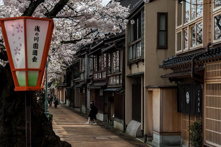 2016.04.06主計町の桜2