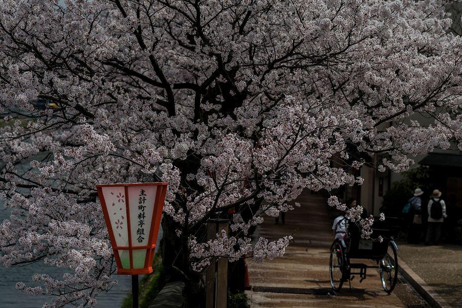 2016.04.06主計町の桜1