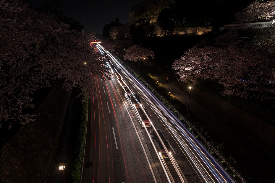 2016.04.06金沢城の桜10