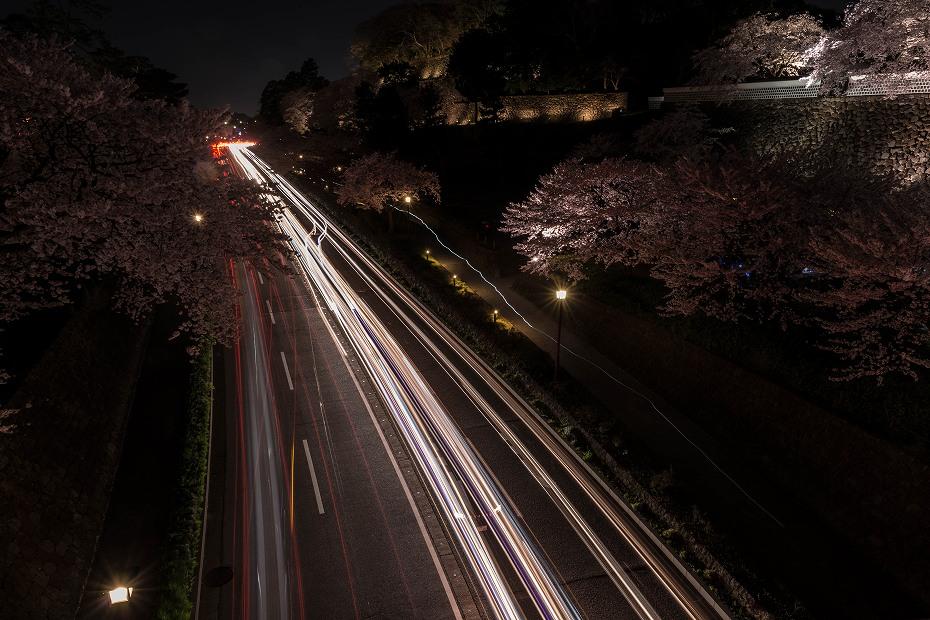 2016.04.06金沢城の桜11