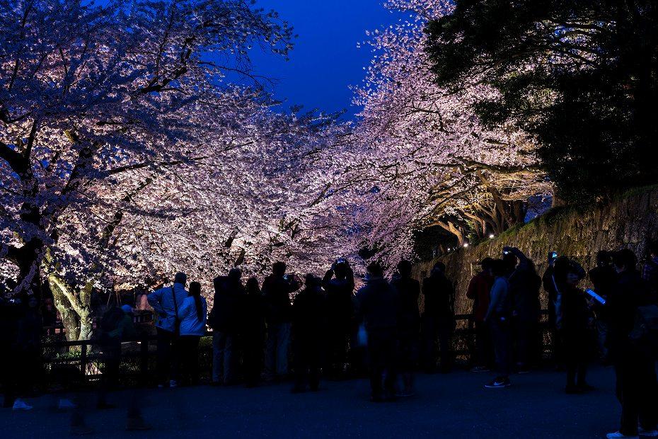 2016.04.06金沢城の桜5