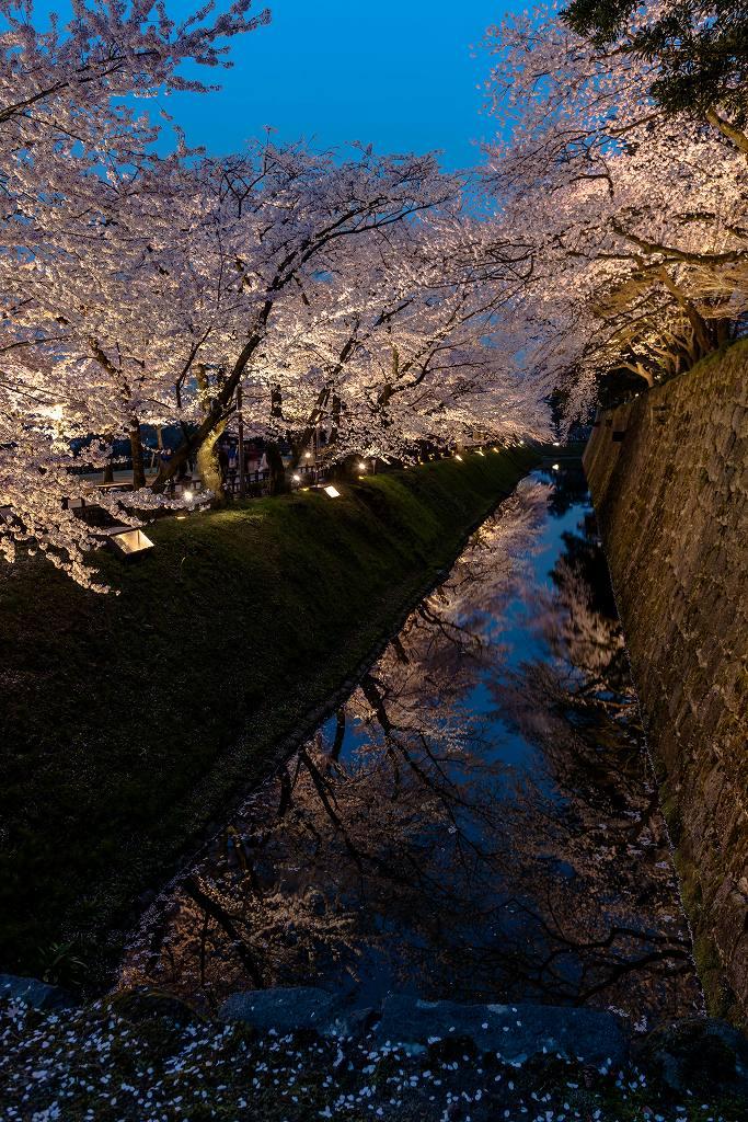 2016.04.06金沢城の桜4