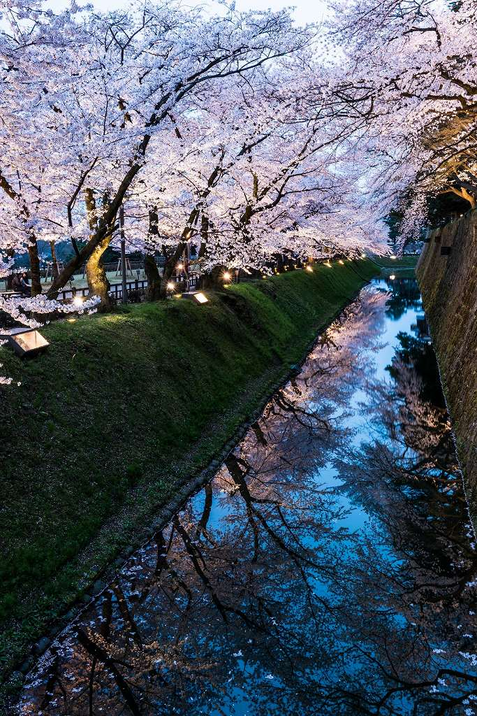 2016.04.06金沢城の桜3