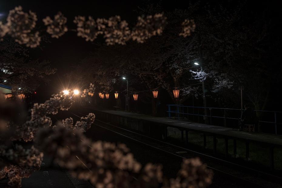2016.04.09能登さくら駅の桜11
