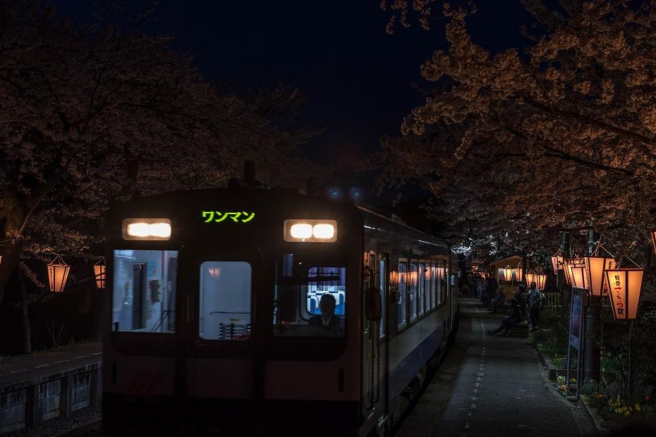 2016.04.09能登さくら駅の桜10