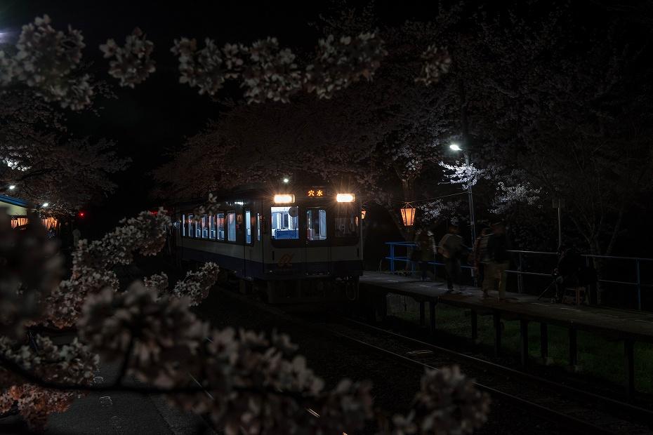 2016.04.09能登さくら駅の桜12