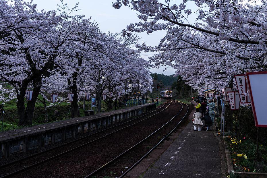 2016.04.09能登さくら駅の桜7