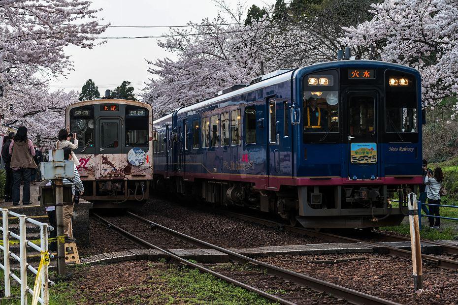 2016.04.09能登さくら駅の桜3