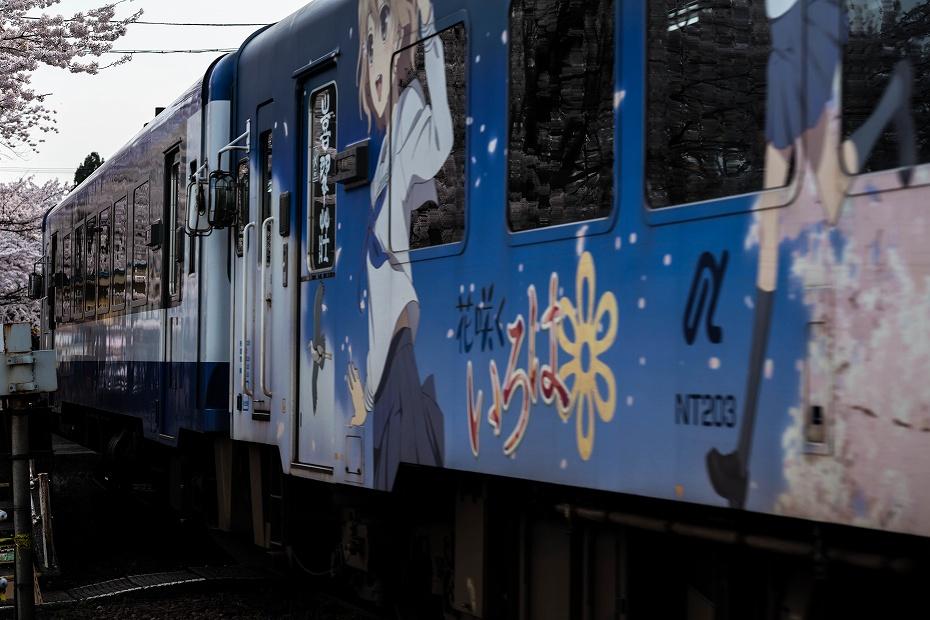 2016.04.09能登さくら駅の桜5