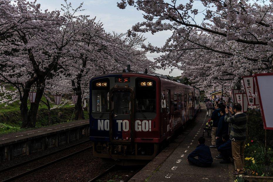 2016.04.09能登さくら駅の桜4