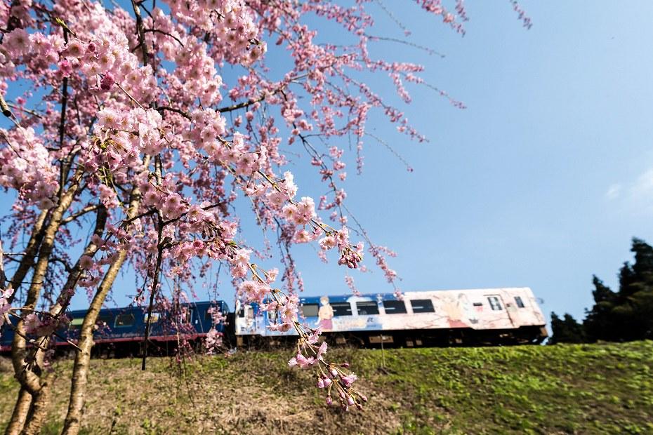 2016.04.09能登さくら駅の桜2