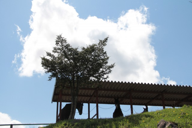 スエトシ牧場:お馬さん