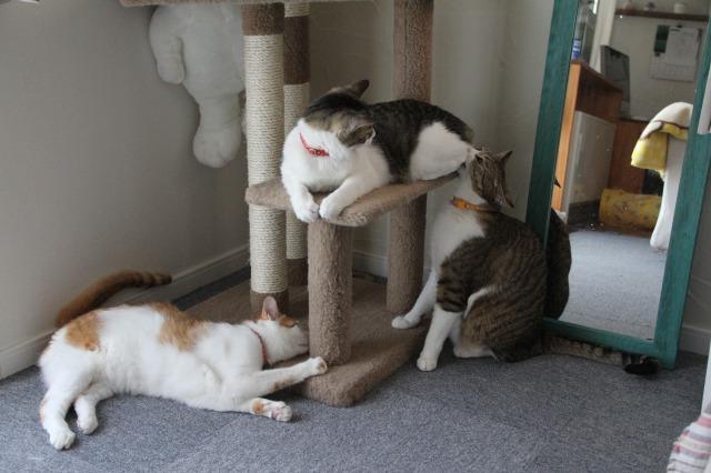 3匹の猫1